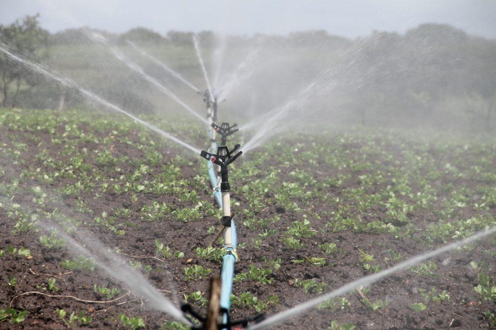 Il miglior kit di irrigazione a goccia: guida alla scelta - Immagine Besty5