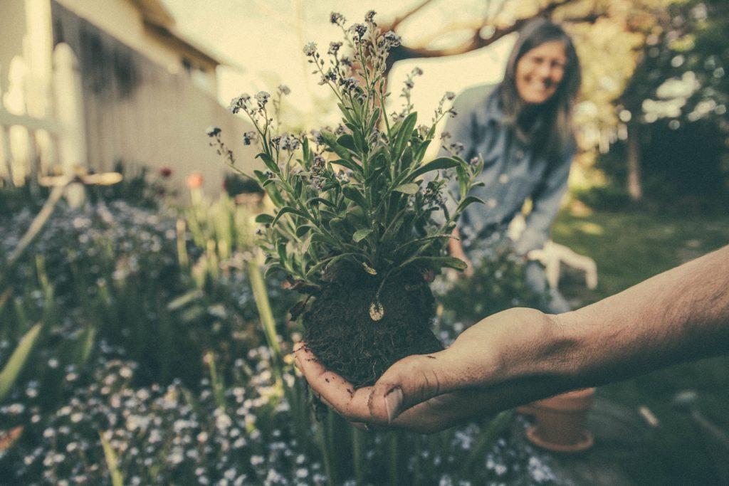 Come avere un giardino perfetto tutto l'anno - Immagine in evidenza